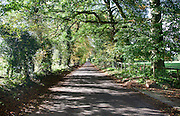 Quiet tree-lined country lane in autumn Lockeridge, Wiltshire, England, UK