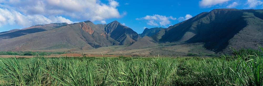 Sugar Cane, West Maui, Mountains, Maui, Hawaii<br />