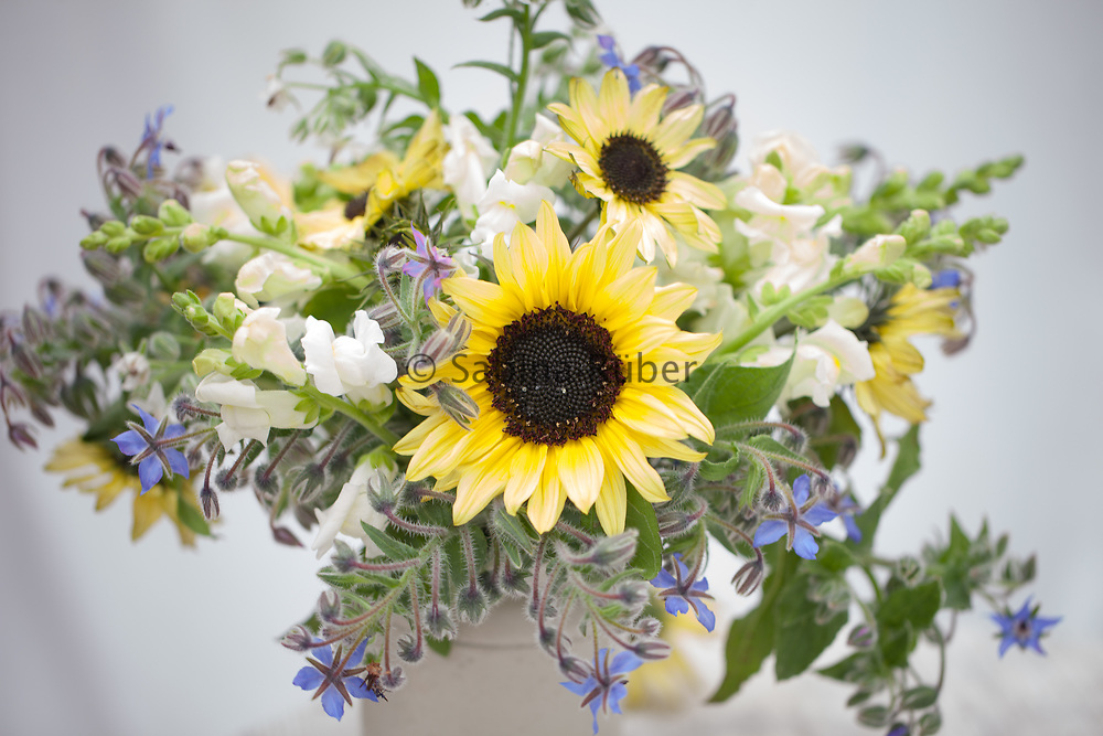 Flower Arrangement with blue and white borage, Antirrhinum majus 'Snowflake' - snapdragon, Cosmos 'Purity' and Helianthus annuus 'Valentine' - sunflower