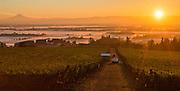Mt. Hood, vineyard, wine, Oregon, Brooks Vineyard