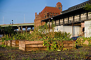 This garden, in downtown Richmond, is operated by the 17th St. Farmers Market and Venture Richmond. The garden provides its produce to local restaurants and the food bank.
