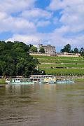Lingnerschloss, Weinberg, Elbe, Dampfer, Dresden, Sachsen, Deutschland.|.Lingner castle, vineyard, Elbe, steamer, Dresden, Germany