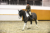 Class 22 - Ridden Paints, Spots, Palominos, Duns & Roans, Equifest Ridden Piebald and Skewbald