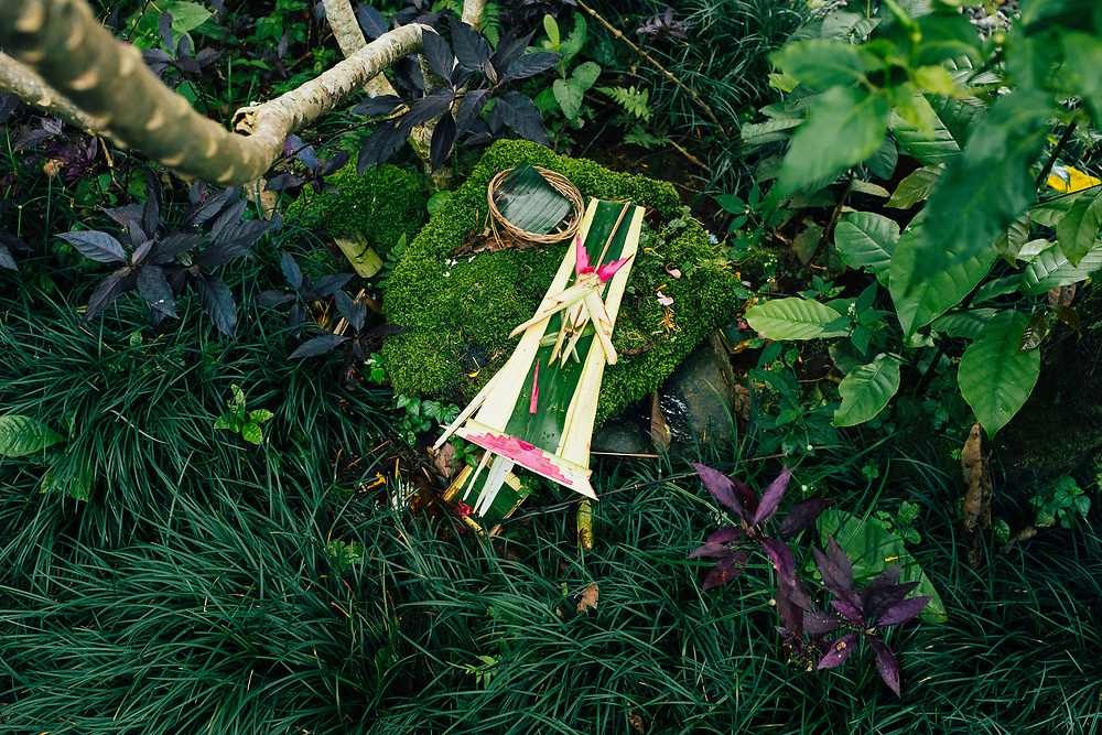 An offering at a small altar in the middle of a forest near Ubud in Bali, Indonesia.