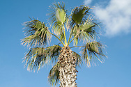 Palm trees are a common sight across Malta, this one is in Marsaxlokk