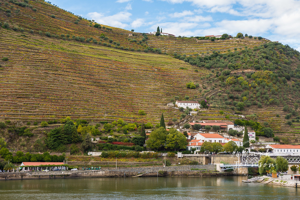 The steeply terraced hillside vineyards of the Douro Valley, Pinhao, Portugal