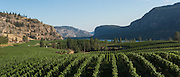 Aerial view over Blue Mountain Vineyards, Okanagan, British Columbia, Canada