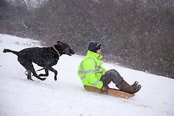 "© London News Pictures. 20/01/2013. Bluebell Hill, Chatham, Kent. Man and his ""best friend"" sledge down the snowy slopes of Bluebell Hill in Chatham, Kent. Continued snowy weather finally hits Kent and is forecast for the next 48 hours. Picture credit should read Manu Palomeque/LNP"