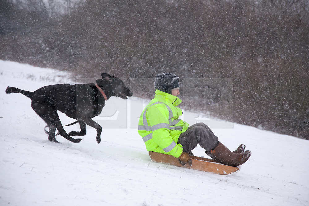 """© London News Pictures. 20/01/2013. Bluebell Hill, Chatham, Kent. Man and his """"best friend"""" sledge down the snowy slopes of Bluebell Hill in Chatham, Kent. Continued snowy weather finally hits Kent and is forecast for the next 48 hours. Picture credit should read Manu Palomeque/LNP"""