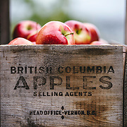 Fresh apples from the fall harvest at Davison Orchards in Vernon, British Columbia
