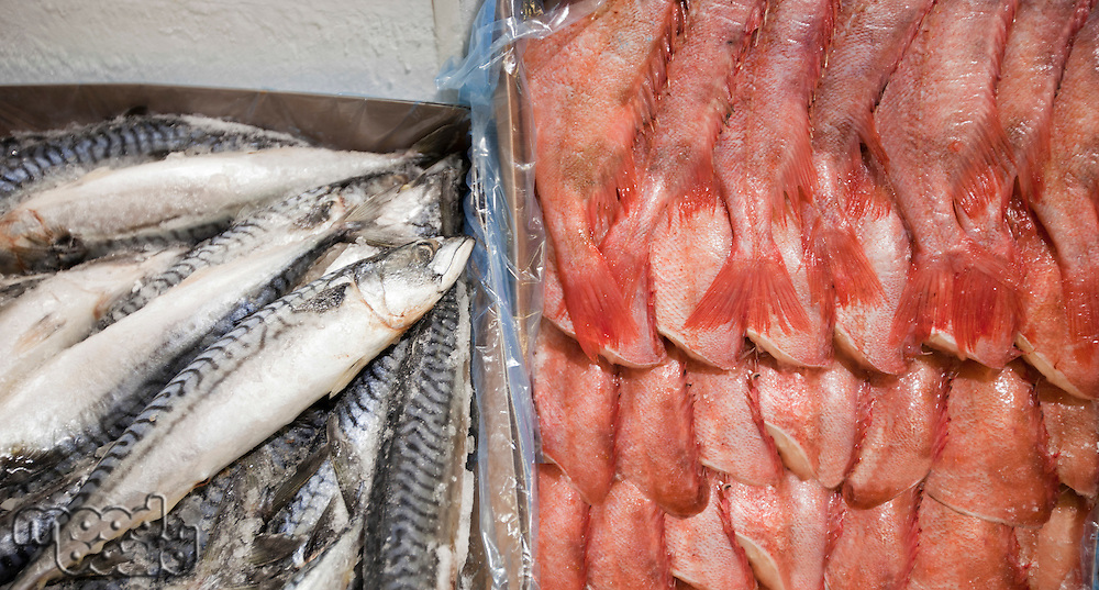 Close-up of freshly caught fishes in container