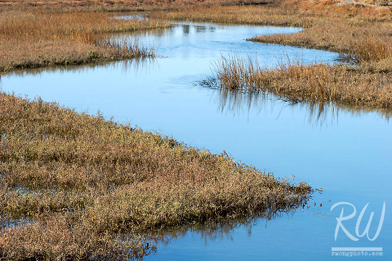 Wetlands, Tijuana Slough National Wildlife Refuge, California