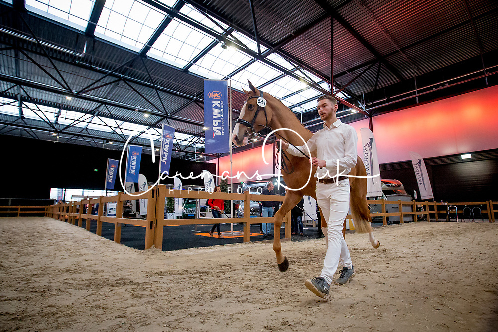 Overview<br /> KWPN Stallion Show 2019<br /> © Hippo Foto - Sharon Vandeput<br /> 1/02/19
