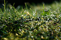 Close up od wet grass and moss