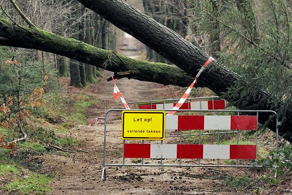 Nederland, Nijmegen, 21-1-2018Mensen die wandelen in het bos, de bossen van Groesbeek en Berg en Dal moeten uitkijken voor vallende takken en bomen die door de storm van donderdag ontworteld zijn.Foto: Flip Franssen