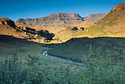 "The north face of Giant's Castle 3315m and Bushman's River Valley, framed by Mtchichi (Leucosidea sericea) the common woody shrub of the Drakensberg.  Its gnarled and twisted trunk makes it look old, hence its Afrikaans name ""ouhout"" (old wood).   Ukhahlamba-Drakensberg Park, KwaZulu-Natal, South Africa.  Nikon D200; 20-35/2.8."