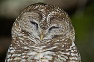 North America owl photoss