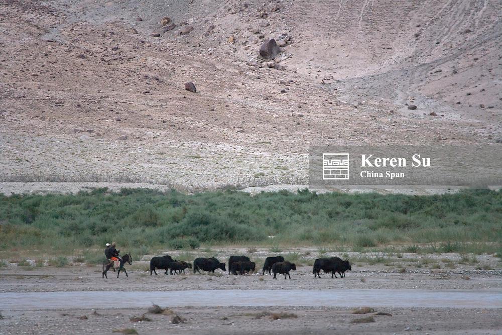 Herding sheep on the Pamir Plateau, Xinjiang Province, Silk Road, China