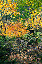 Autumn brings changing color to Portland's famous Japanese Tea Garden. Pond pictured is part of the Natural Garden area.