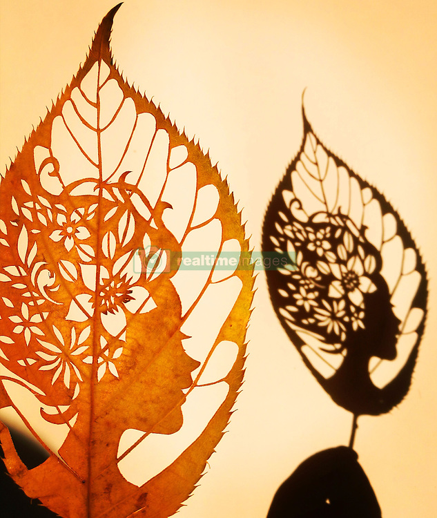 January 11, 2017 - Qingdao, Qingdao, China - Qingdao, CHINA-January 11 2017: (EDITORIAL USE ONLY. CHINA OUT) ..The leaf carving artwork 'Kiss of Spring' made by the primary school teacher Wang Ping in Qingdao, east China's Shandong Province, January 11th, 2017. Wang Ping collected various leaves in spare time and made many beautiful artworks of leaf carving in the way of paper-cutting. Natural leaf carving is actual manual cutting and removal of a leaf's surface to produce an art work on a leaf. (Credit Image: © SIPA Asia via ZUMA Wire)