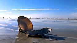 SOUTH AFRICA. Muizenberg. 25.08.18. An interesting shell on Muizenberg beach . Picture Ian Landsberg/African News Agency (ANA)