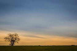 lone tree in a field against a beautiful sky