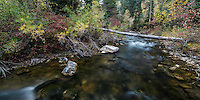 The American Fork River flows slowly through the woods during Fall Colors in Utah's American Fork Canyon.