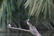 14: ECOTEACH BIRDS