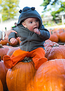 Ryan, 5-months-old, of Merrick, visits Hicks Nursey with his family, on October 13, 2012.