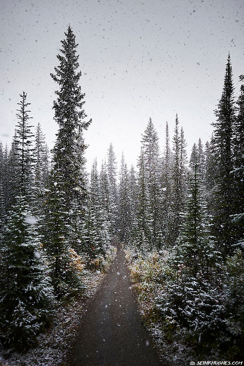 A pathway leads through a forest of pine trees while snow flakes fall from the sky.