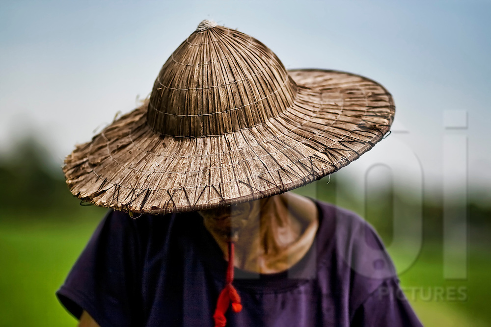 Portrait of a farmer in a rice field near Thai Binh wearing a Vietnamese hat, Northern Vietnam, Southeast Asia