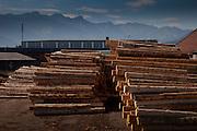 Situé à la périphèrie de la ville de Bulle la menuiserie Desponds, propriété de François Rime, UDC, est une des plus grandes scieries de Suisse traitant 160'000 m³ d'épicéa et de sapinpar an. Elle occupe une position de leader dans l'industrie du bois du pays et plus particulièrement, dans la mise en valeur des grumes provenant de la forêt suisse. Sciage et séchage, raboterie produisant lambris, lames de plancher et revêtements extérieurs; moulures, baguettes et plinthes; bois collés (aboutés, rabotés) utilisés dans les constructions les plus diverses; traitements de surface, respectueux de l'environnement, n'utilisent que des vernis à base d'eau. Die Sägerei Desponds SA ist Leader in der Schweiz und verarbeitet pro Jahr 160'000 m³ heimisches Holz. Besitzer: François Rime, SVP Nationalrat und Bundesratskandiat 2010. © Romano P. Riedo