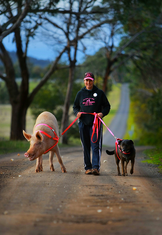 Pam Ahern - President and Founder, Edgar's Mission taking Bur the pig and Jessie the dog for a walk, Story on intelligence of pigs follow on to Animal rights adds which have been playing on radio  .Pic By Craig Sillitoe  08/08/2008 SPECIALX 000 melbourne photographers, commercial photographers, industrial photographers, corporate photographer, architectural photographers, This photograph can be used for non commercial uses with attribution. Credit: Craig Sillitoe Photography / http://www.csillitoe.com<br />