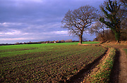 ARM4A0 Path field tree scenic view Butley Suffolk England