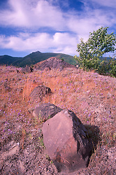 Volcanic Rocks and Grasses in the Hummocks, Mt. St. Helens National Volcanic Monument, Washington, US