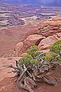 Green River Overlook, Canyonlands National Park, Moab, Utah