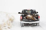 Montana elk hunt RAM