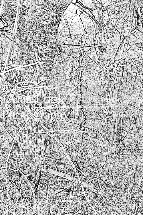 02Apr2010: A broken down gate and barbed wire fence overgrown with foliage stands in front of a mighty oak tree at Comlara Park, McLean County, Illinois<br />