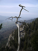Gruyère lake with old dried tree. Vue sur le lac de Gruyère depuis la colline du Bifé / Biffet, Gruyère, Suisse. Blick auf den Greyerzersee mit knorrigem Baum beim Einnachten. © Romano P. Riedo   fotopunkt.ch