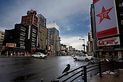 Japan. A raven in Sapporo.©Carmen Secanella.