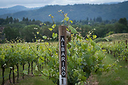 Abacela, Umpqua Valley, Southern Oregon