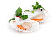 Seafood - Fresh scallops over white background.