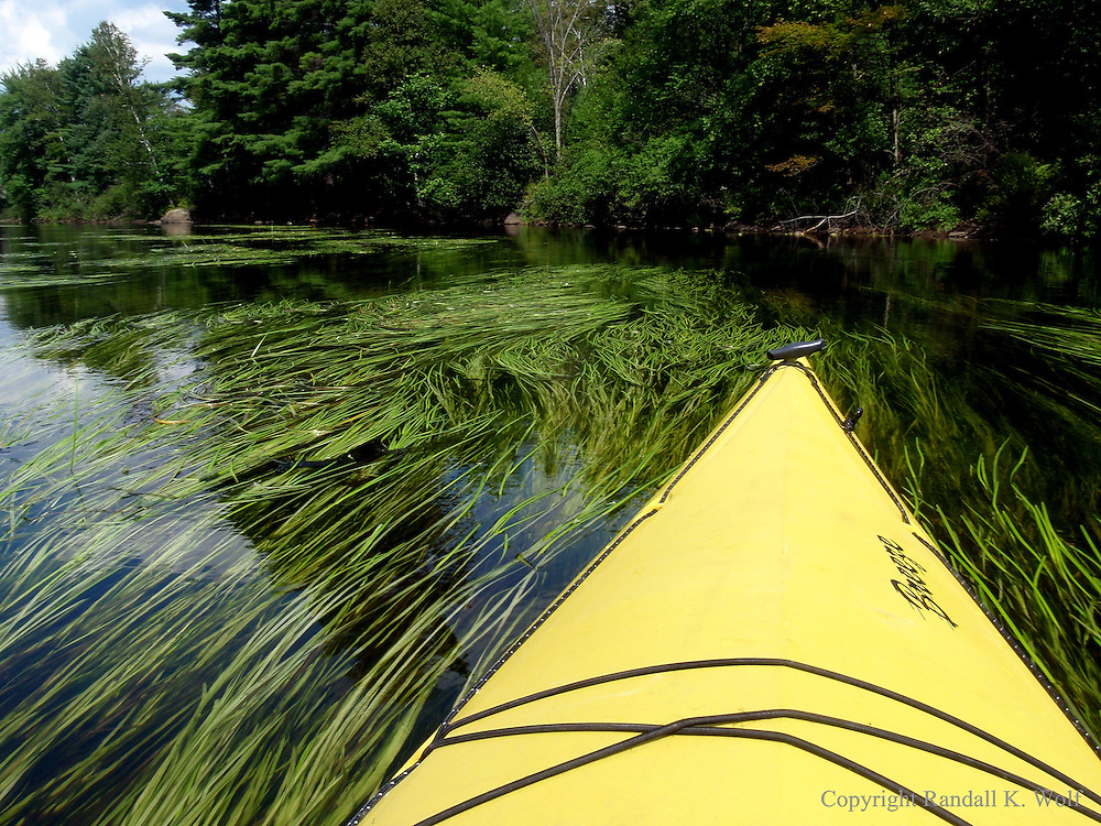 A kayak glides through long flowing grass in the Saranac River North of the town of Saranac Lake in the Adirondack Mountains in Northern New York. ( Photo by Randall K. Wolf )