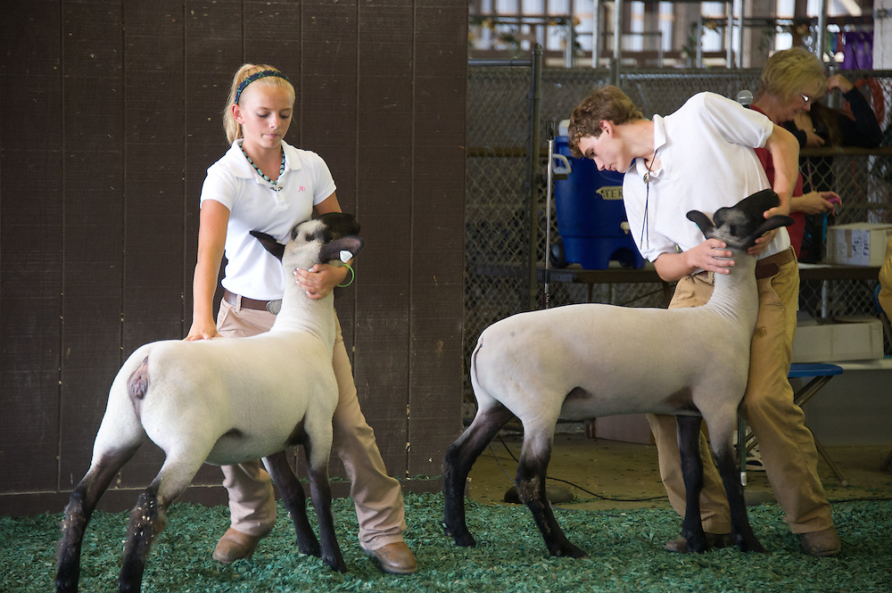 4H youth showing and competing with livestock Maryland State Fair in Timonium MD