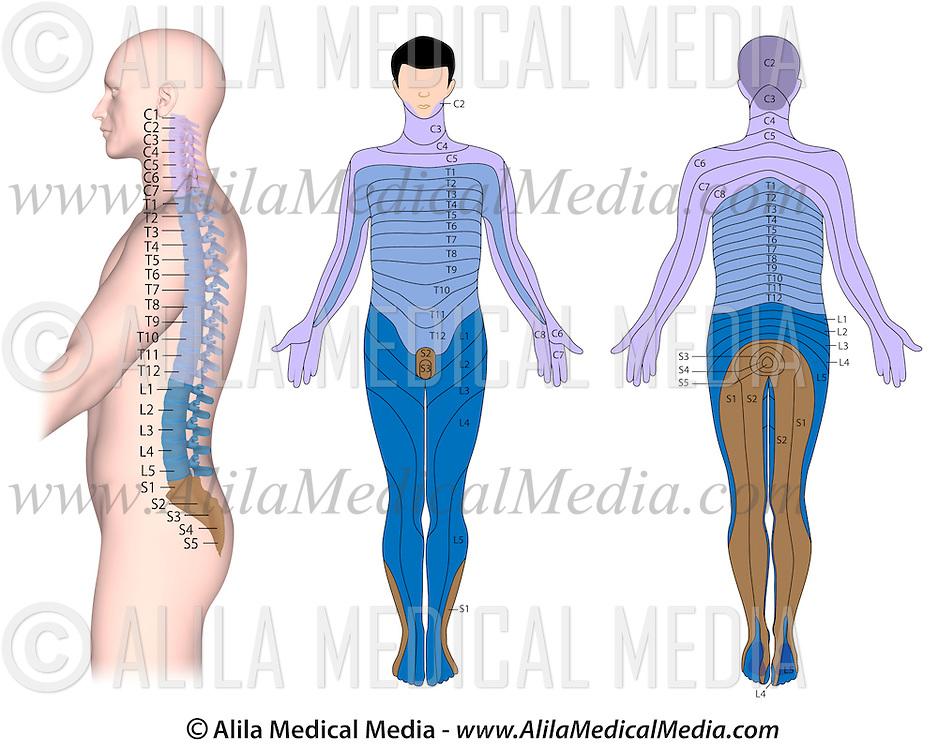 Spinal Cord Injury Alila Medical Images