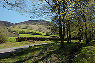 Green fields in spring in Borrowdale, Lake District National Park, Cumbria, UK