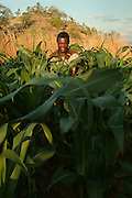 Africa. Malawi. Likoma Island. Farmer and his maize crops. Grown on small plantation irrigated by lake water..CD0009