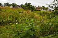 Farm in Playa La Mulata, Pinar del Rio Province, Cuba.