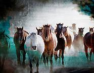 Equestrian Gallery - DesignLIFE