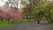 A jogger on the bridle path around the Reservoir in Central Park